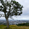 Auckland from Mt. Eden
