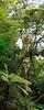 Majestic Kauri Tree