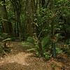 The start of the Totara walk and the new Timber Trail cycle track. 2011