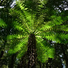 Forest fern on the short walk near the Pureora Lodge in the Waipapa Block.