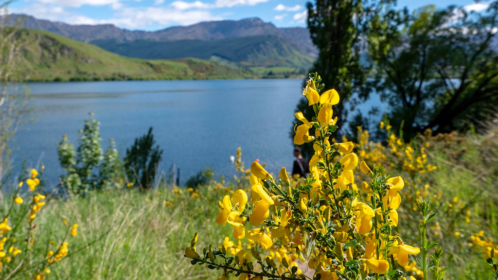 Day Trips From Queenstown: Flowers at Lake Hayes in spring