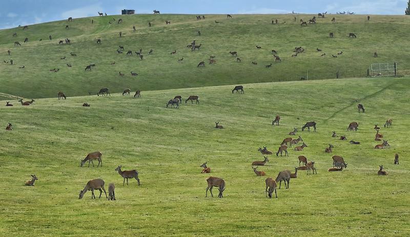 Red Deer - Queenstown to Dunedin Highway