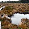 Track across a bog area.