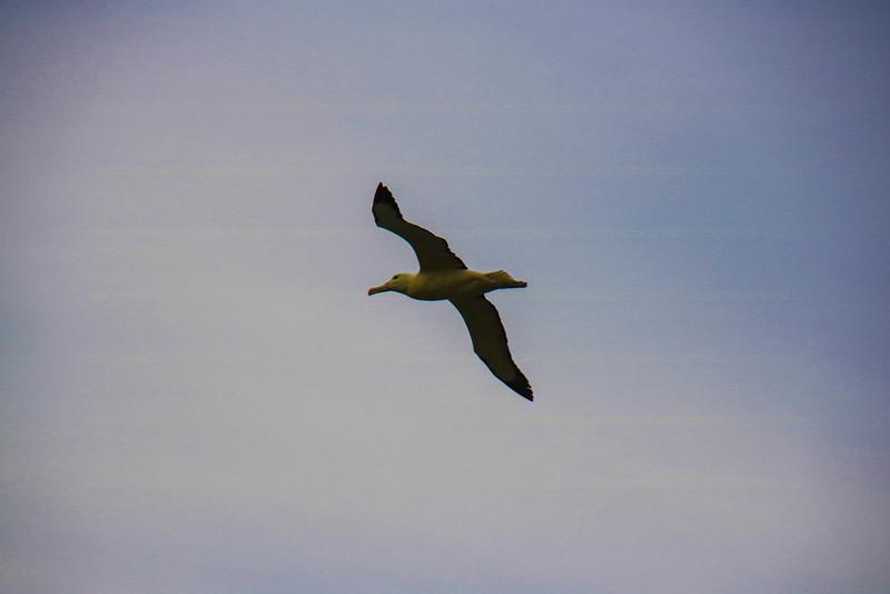 Royal Albatross Center