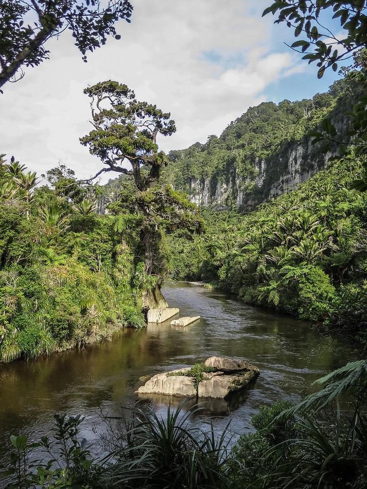 Pororari River Trail