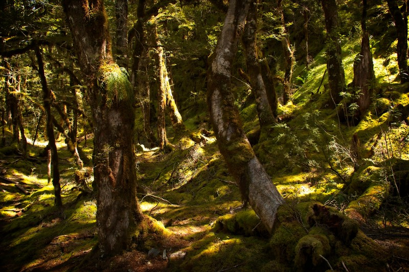 Haast Pass Trail