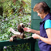 Robyn feeding our friendly Kaka at the house we rented. He came to visit every day and would wake us up if he thought we were running late.