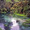 Waihou River walk 10/2004.