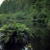 Ohinetonga Lagoon near Owhango. 12/1994