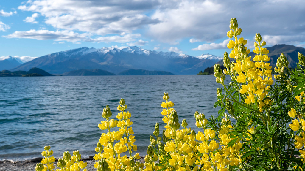 Lake Wanaka - Things to do in Wanaka New Zealand