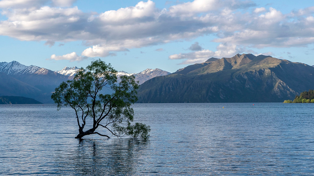 That Wanaka Tree #ThatWanakaTree Lake Wanaka New Zealand