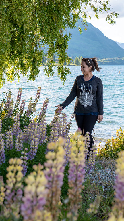 Lupines at Lake Wanaka - Things to do in Wanaka NZ