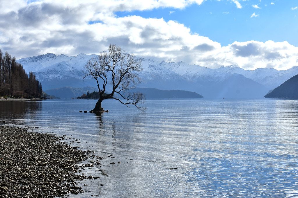 That Wanaka Tree in Lake Wanaka