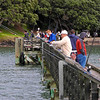 More fishing at Cornwallis Wharf