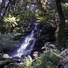 Small waterfall on the Whirinaki River loop track.