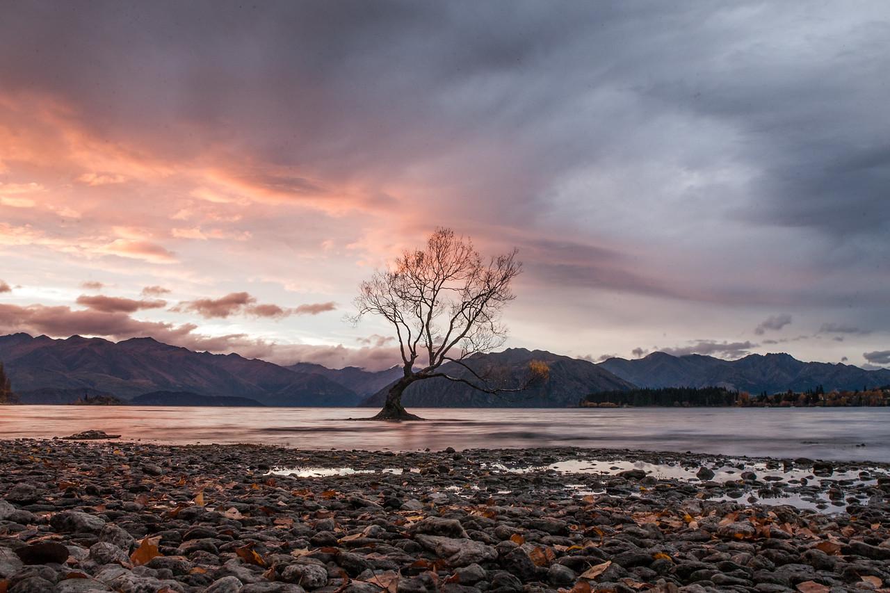 #thatwanakatree, Wanaka, New Zealand