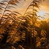 Rising sun at Egmont National Park, Tatanaki, New Zealand