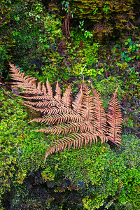Forest Fern Resting Boldly