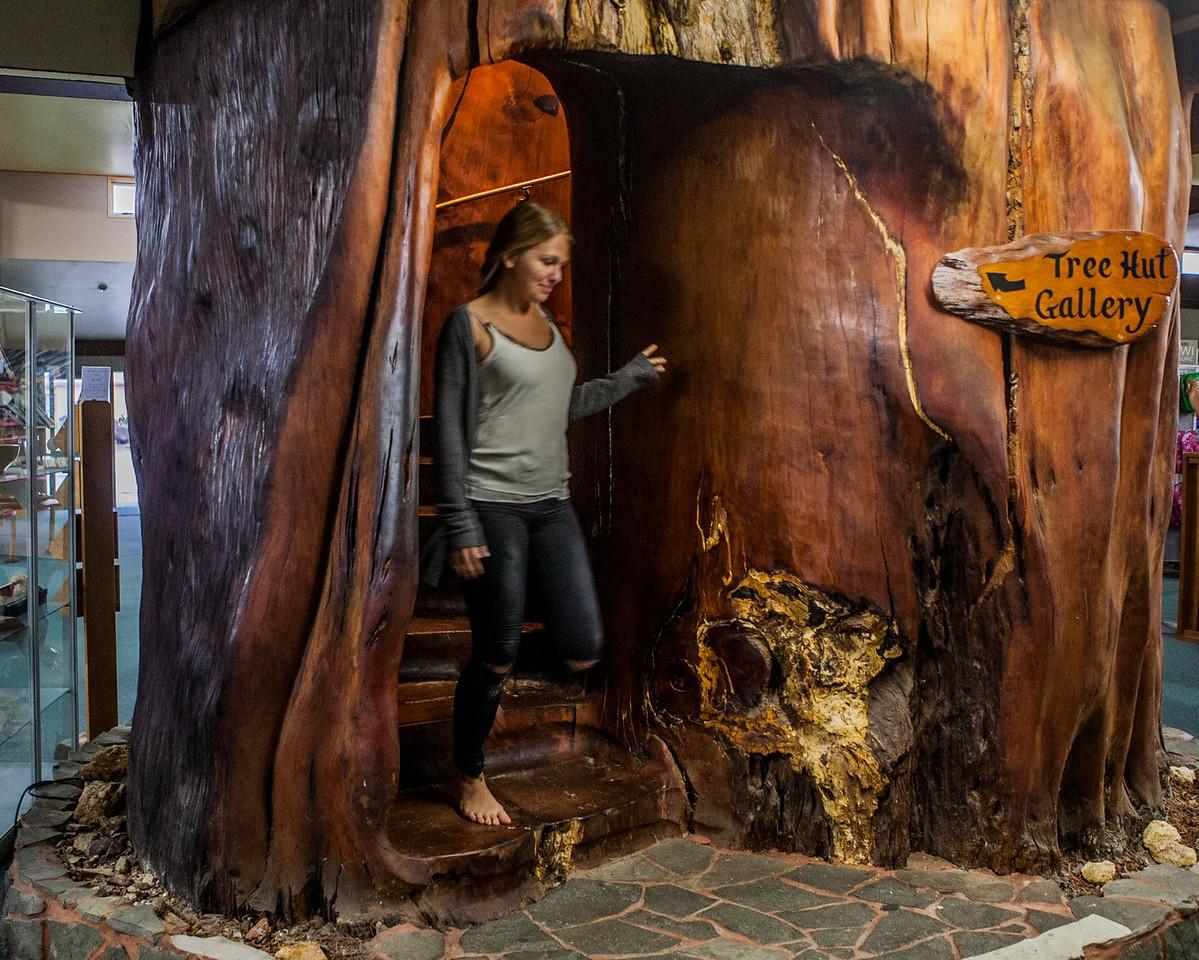 Kauri tree inside shop at Awanui, New Zealand