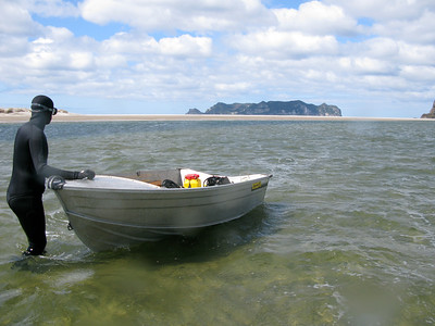 Preparing to swim on a mussel bed (dark patch in the background)