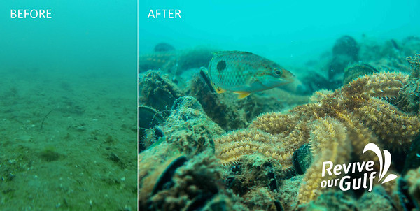 Before and after photos for green lipped mussel beds