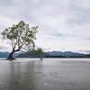 Wanaka Tree; 16mm 8 ISO 100 f/20