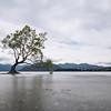Wanaka Tree; 16mm 8 ISO 100 f/20
