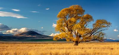 Omarama Tree