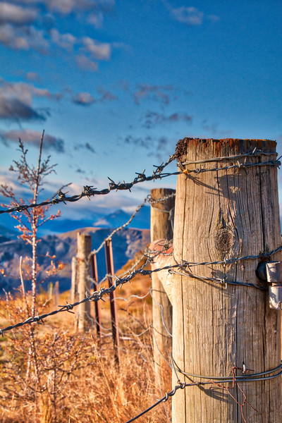Down the Fence Line