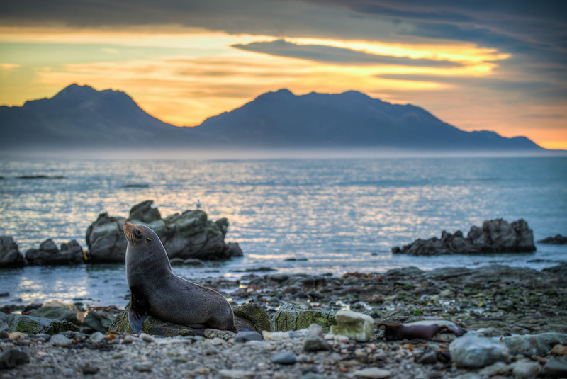 Sunrise Seal