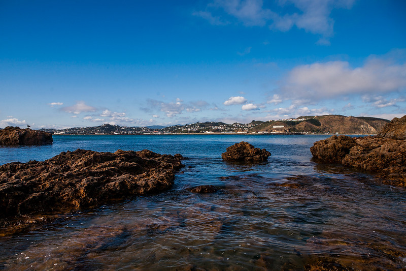 Coastline of South Wellington, on the walk from Lyall Bay to Island Bay, New Zealand