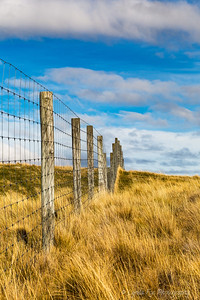 Fenceline Standing Tall
