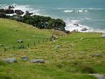 New Zealand, North Island, Tauranga