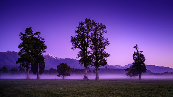 Dawn mist, West Coast