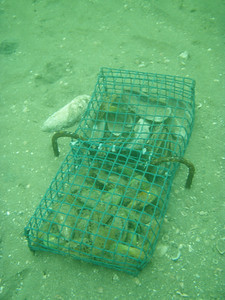 Restoration cages for green lipped mussels