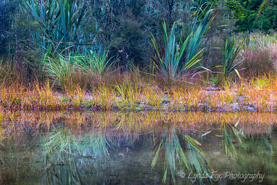 Riverbed Reflections