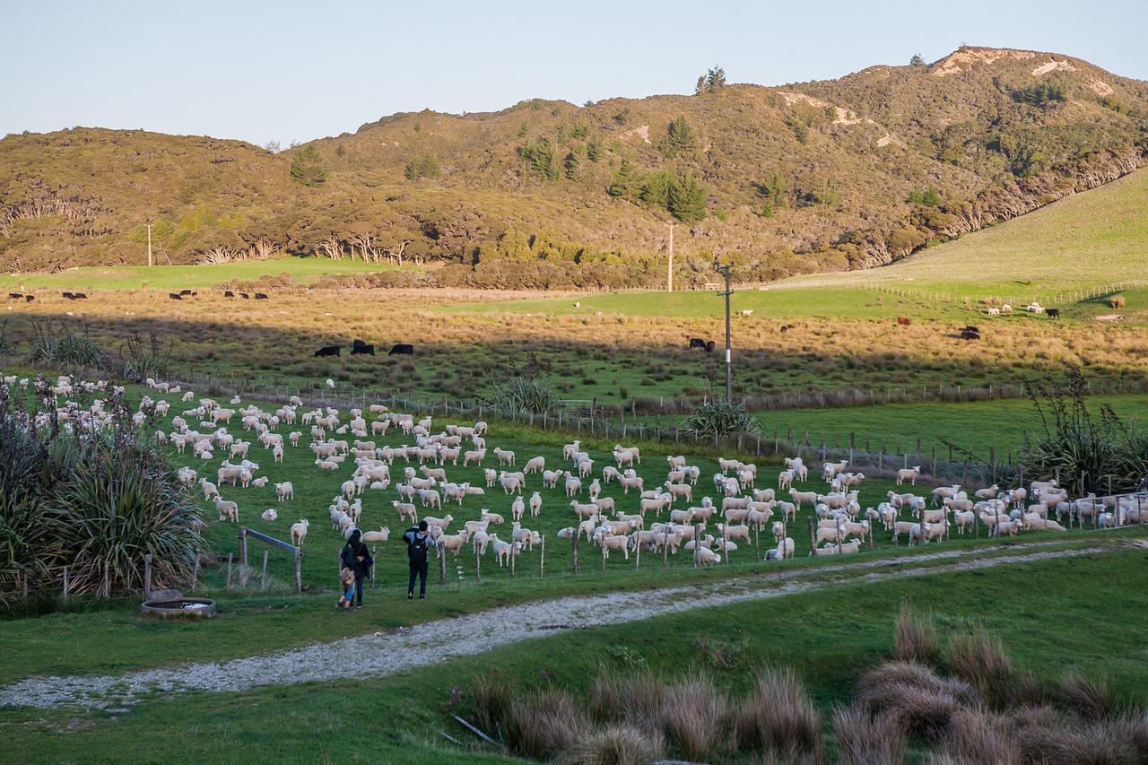 Walk to the Wharariki beach, South Island, New Zealand