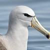 Albatross; 420mm 1/4000 ISO 900 f/6.3