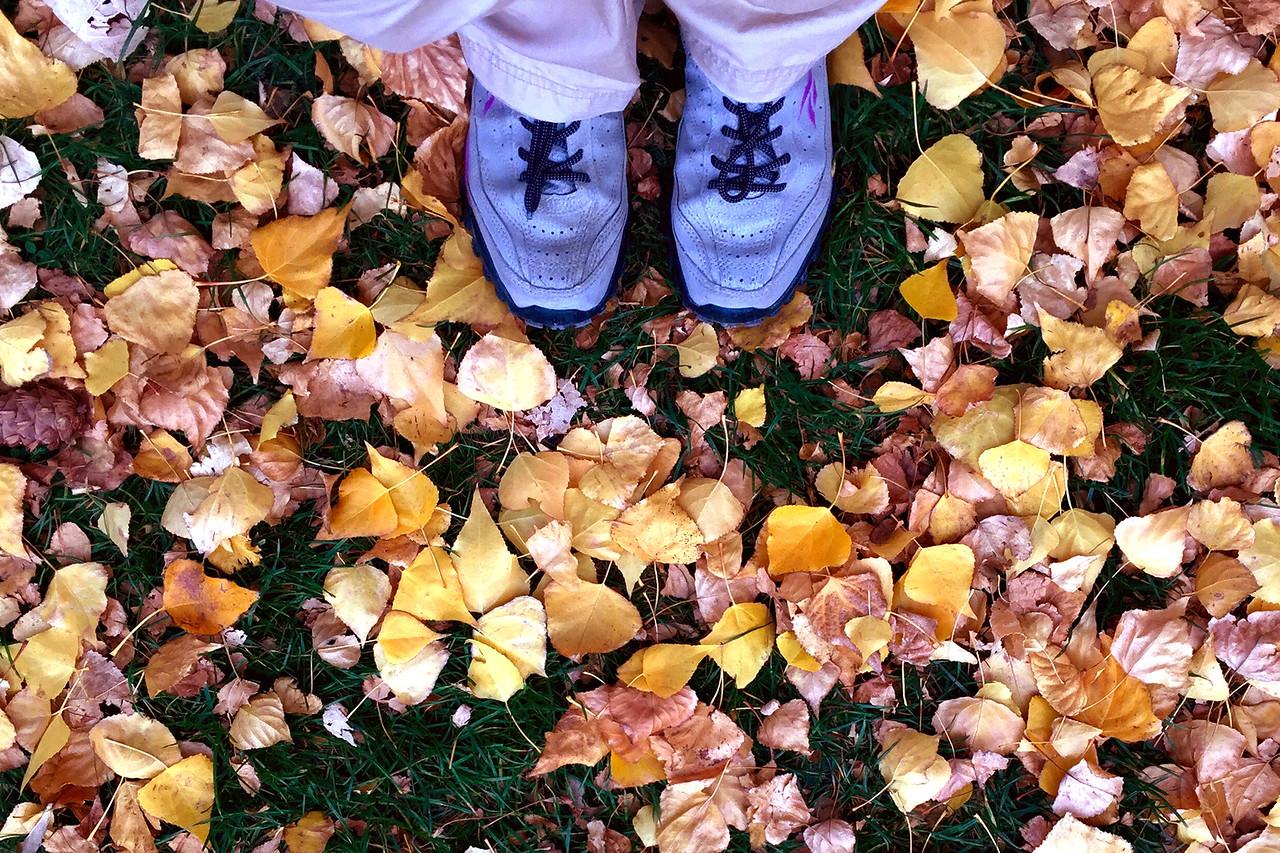 Fall colours at Wanaka, New Zealand