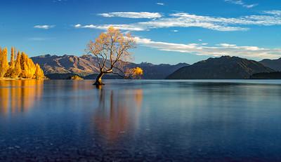 Wanaka Tree II