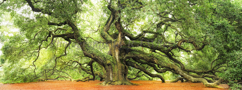 Angel Oak 2502