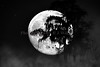 Moon over the glades 1307 BW