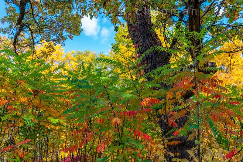 Fall Moaic