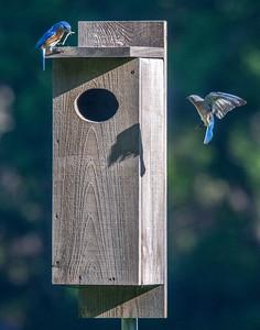 """The Bluebird """"Condo"""""""