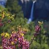 Ellen_B  Red Bud and Bridal Veil Falls