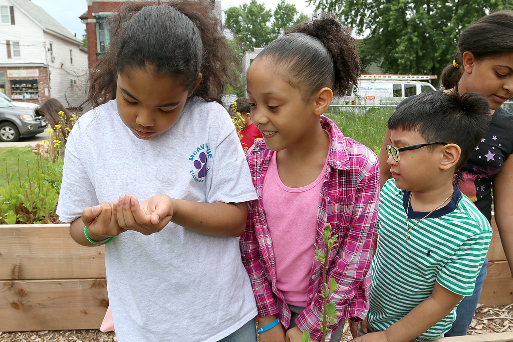 """. A new community garden, they are calling \""""Shelbie\'s Seed of Promise,\"""" was recently planted at Father Maguires Park in memory of Shelbie Murphy. Second grade students from McAvinnue Elementary School check out the bugs in the garden Friday. From left is Esmaralda Colon, Briana Chacon-Rios and Nathan Nguyen. SUN/JOHN LOVE"""