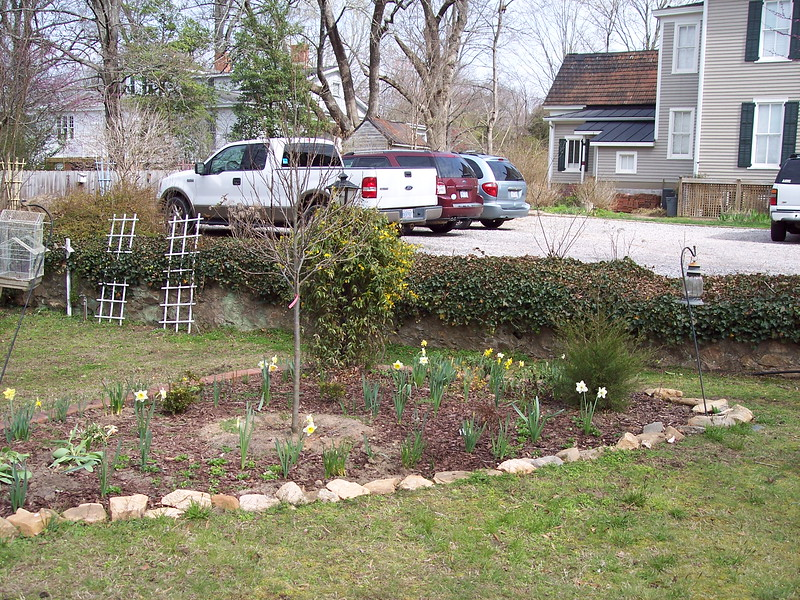 Monday, March 19, 2018 - Right hand end of new bed.  New Blackgum tree.
