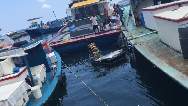 2017, Maldives, Male, Tuna, Fishmarked.