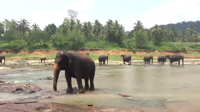 2017 Sri Lanka, Pinnawala, Elephant Orphanage.