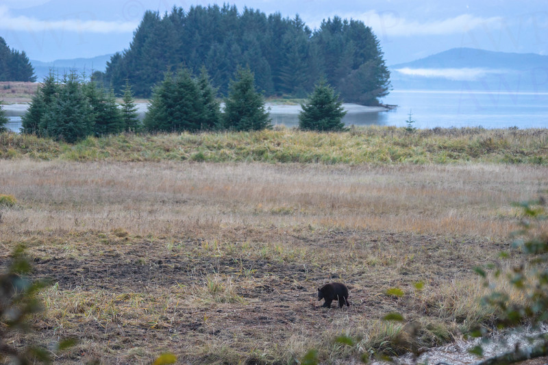 Bear At Eagle Beach